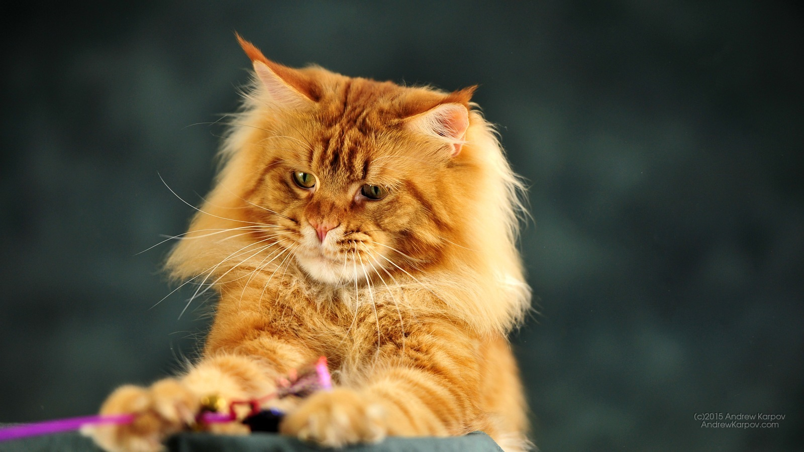 Gambar Kucing Error godean.web.id