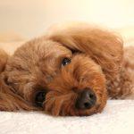 Berikut 7 Hal Penting yang Dibutuhkan Bayi Anjing