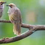 Bertambahnya Jenis Burung Di Indonesia Tahun 2019