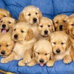 Berikut Cara Merawat Anak Anjing yang Berumur 1 Bulan