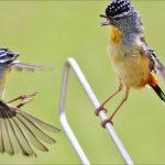 5 Burung kecil yang menggemaskan