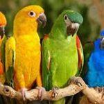 13 Jenis Burung Kakatua di Dunia